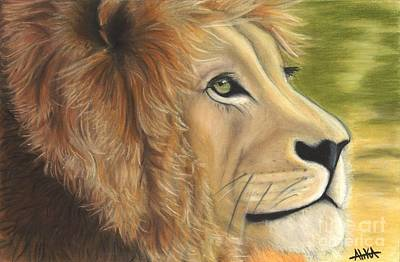 Sahara Drawing - Lion's Dynasty by Alika Crooks