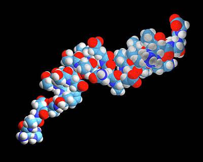 Liraglutide Obesity Drug Molecule Art Print by Dr Tim Evans