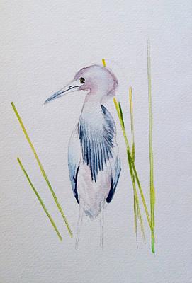 Fauna Painting - Little Blue Heron by Jason M Silverman