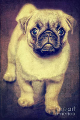 Little Dog Art Print by Angela Doelling AD DESIGN Photo and PhotoArt