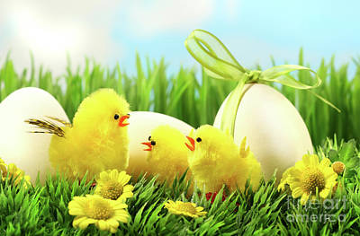 Little Yellow Easter Chicks In The Tall Grass  Art Print by Sandra Cunningham