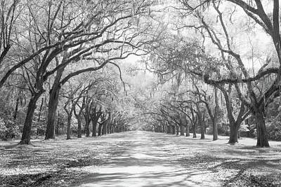 Historic Site Photograph - Live Oaks And Spanish Moss Wormsloe by Panoramic Images