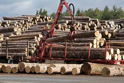 Logs At A Sawmill Art Print