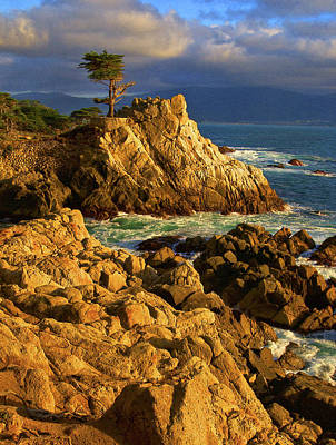 Lone Cypress Photograph - Lone Cypress On The Coast, Pebble by Panoramic Images