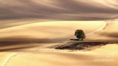 Moravia Photograph - Lonely Tree by Jaroslaw Blaminsky