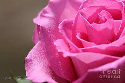 Photograph - Long-stemmed Pink Rose by J McCombie
