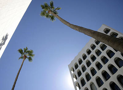 Photograph - Looking Up In Beverly Hills by Cora Wandel