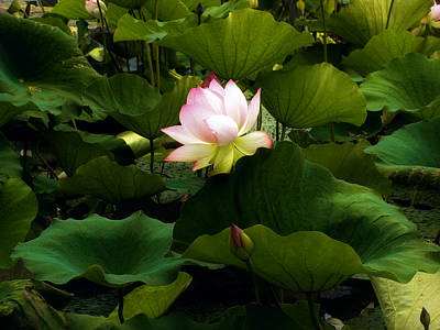 Photograph - Lotus by Jessica Jenney