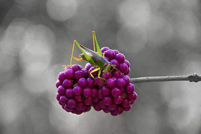 Grasshopper Digital Art - Lunch Time by Linda Segerson