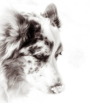 Maggie Art Print by Cathy Donohoue