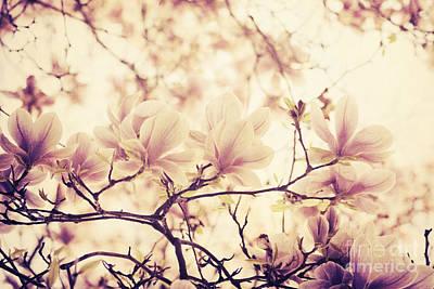 Magnolia Art Print by Jelena Jovanovic