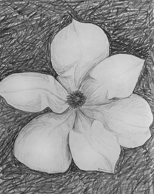 Magnolia Flower Drawing - Magnolia by Kume Bryant