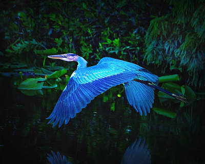 Birds Photograph - Wings Of Blue by Mark Andrew Thomas