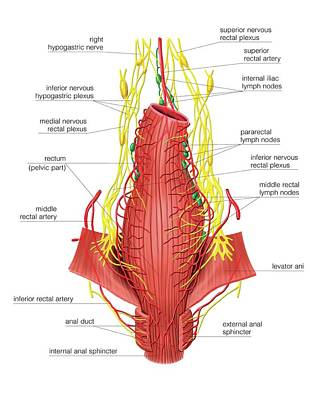 Anal Photograph - Male Perineum by Asklepios Medical Atlas