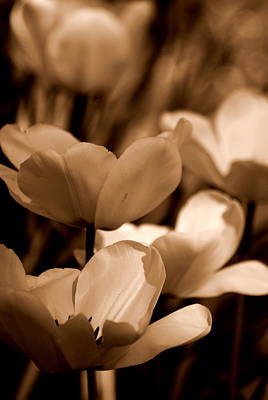 Photograph - Many Tulips by Kathy Sampson