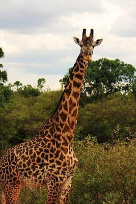 Masai Mara Giraffe  Original by Aidan Moran