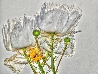 Photograph - Matilija Poppy by Liz Vernand