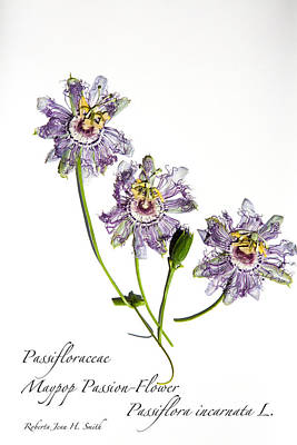 Photograph - Maypop Passion-flower by Roberta Jean Smith