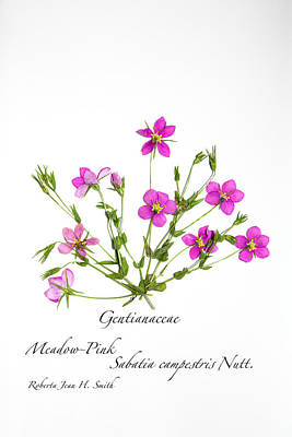 Photograph - Meadow-pink by Roberta Jean Smith
