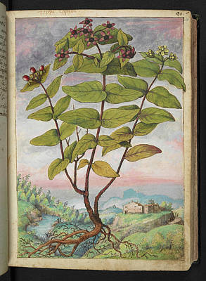 Medicinal Plant Art Print by British Library