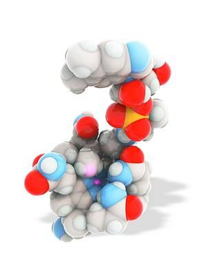 Coenzyme Photograph - Methylcobalamin by Ramon Andrade 3dciencia