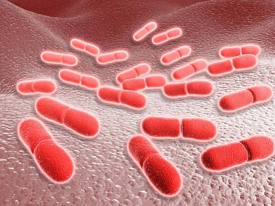 Rod Shape Digital Art - Microscopic View Of Listeria by Stocktrek Images