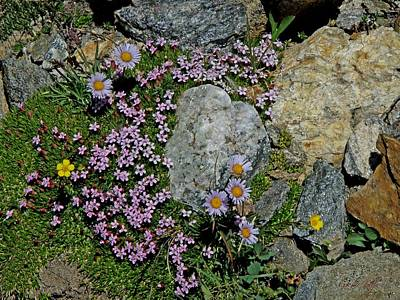 Photograph - Miniature Rock Garden by George Tuffy