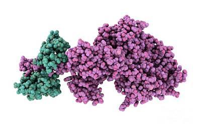 Motor Protein Photograph - Molecular Motor Protein by Laguna Design