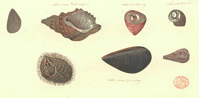 Painter Photograph - Molluscs by Natural History Museum, London