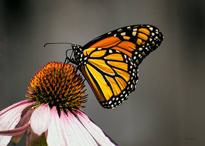 Photograph - Monarch Butterfly by Bob Orsillo