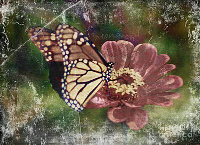 Photograph - Monarch- Butterfly Mixed Media Photo Composite by Patricia Griffin Brett