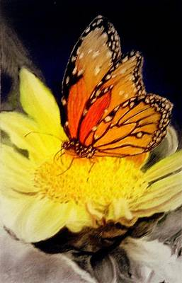 Monarch Resting Sold Pastel Art Print by Antonia Citrino