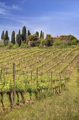 Vineyards Photograph - Montalcino by Joana Kruse