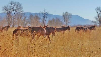 Photograph - More Mules by Marilyn Diaz
