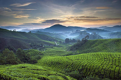 Morning At Cameron Highlands Art Print