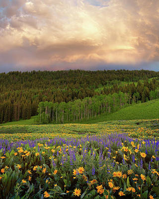 Photograph - Mountain Color by Leland D Howard
