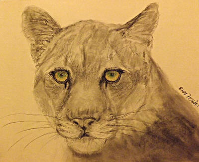 Drawing - Mountain Lion by Michelle Wolff