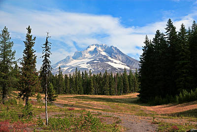 Photograph - Mt. Hood National Forest by Athena Mckinzie