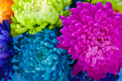 Photograph - Multicolored Chrysanthemums  by Jim Corwin