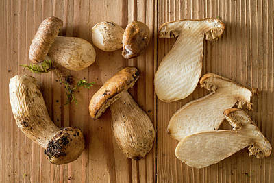 Cep Photograph - Mushrooms by Aberration Films Ltd
