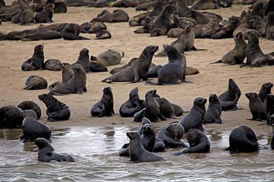 Fur Seal Photograph - Namibia, Walvis Bay by Kymri Wilt