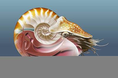 Nautilus, Artwork Art Print by Science Photo Library