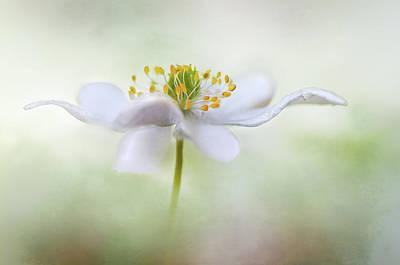 Blur Photograph - Nemorosa* by Mandy Disher