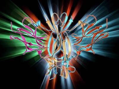 Molecular Structure Photograph - Nerve Growth Factor Bound To Receptor by Laguna Design