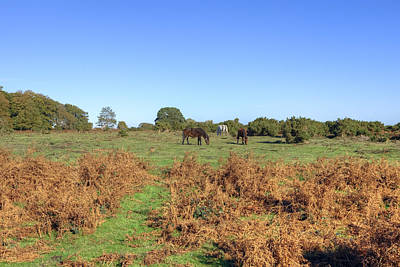 New Forest Pony Photograph - New Forest by Joana Kruse