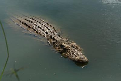 Photograph - Nile Crocodile  by Aidan Moran