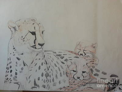 Cheetah Drawing - None by Karen Cassels