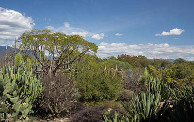 Oaxaca Ethnobotanical Garden Art Print