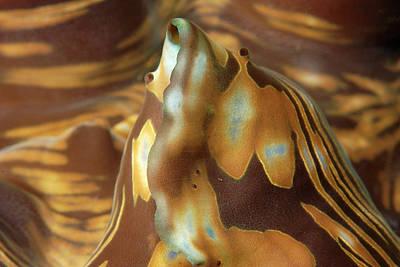 Oceans Art Print by Andre Seale/vwpics