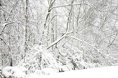 Virginia Snow Photograph - October Snow  by Thomas R Fletcher